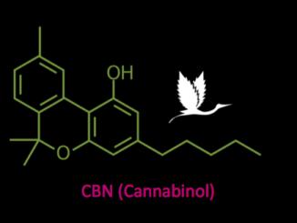CBN Cannabinol