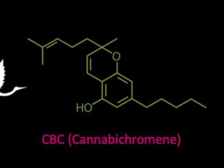 CBC cannabichromene