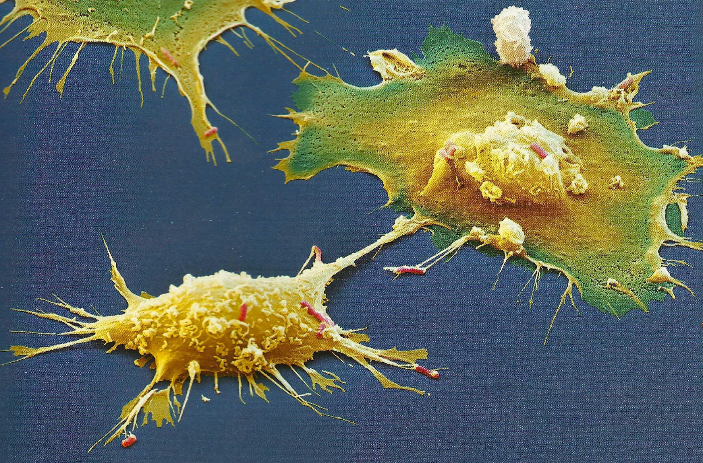 CBG fights microbes