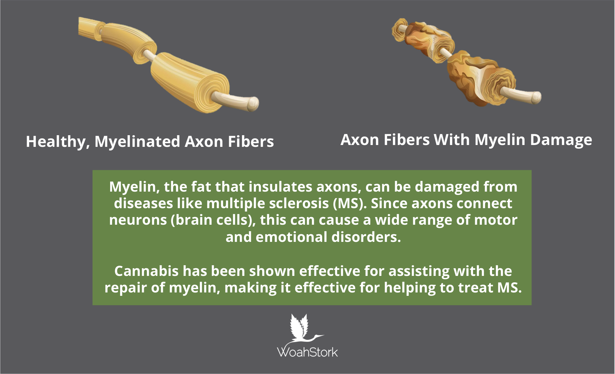 Sativex for axons with damaged myelin