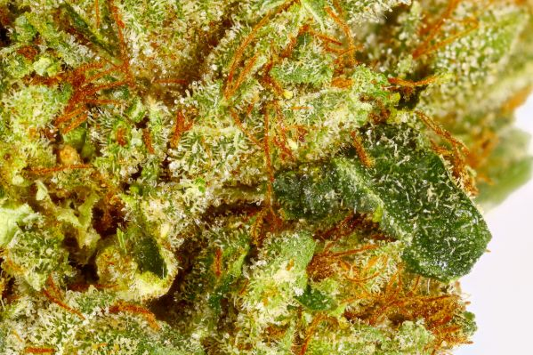 Top 10 Strains of Cannabis for Beginners