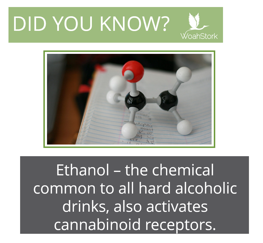 alcohol vs weed -- ethanol activates cannabinoid receptors