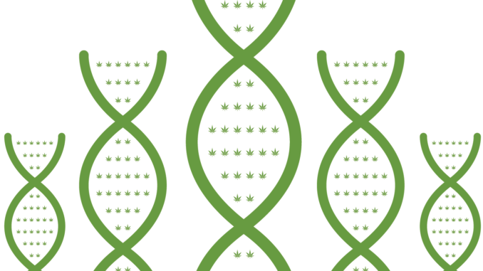 cannabis genes DNA illustration