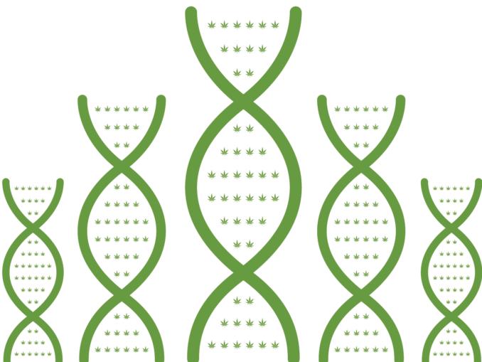 cannabis genes DNA illustration