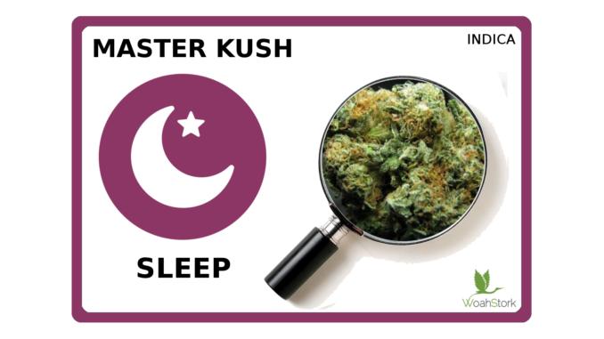 Master Kush strain guide