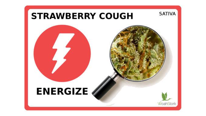 Strawberry Cough Strain Guide