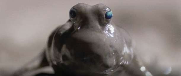 amphibious frog opening its eyes daily dose of woah