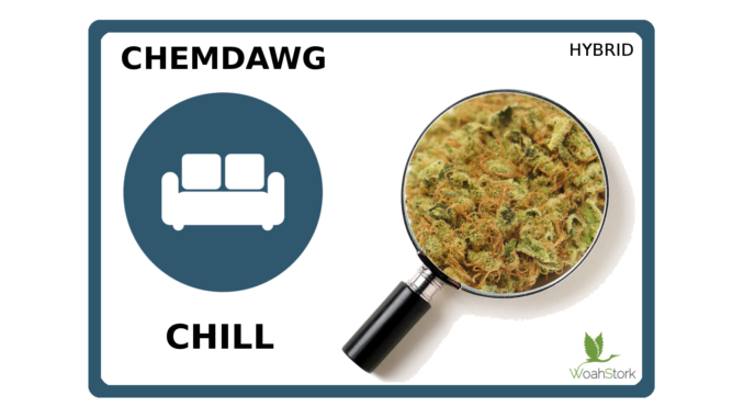 A strain to chill out with