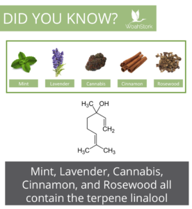 linalool is a terpene found in many plants