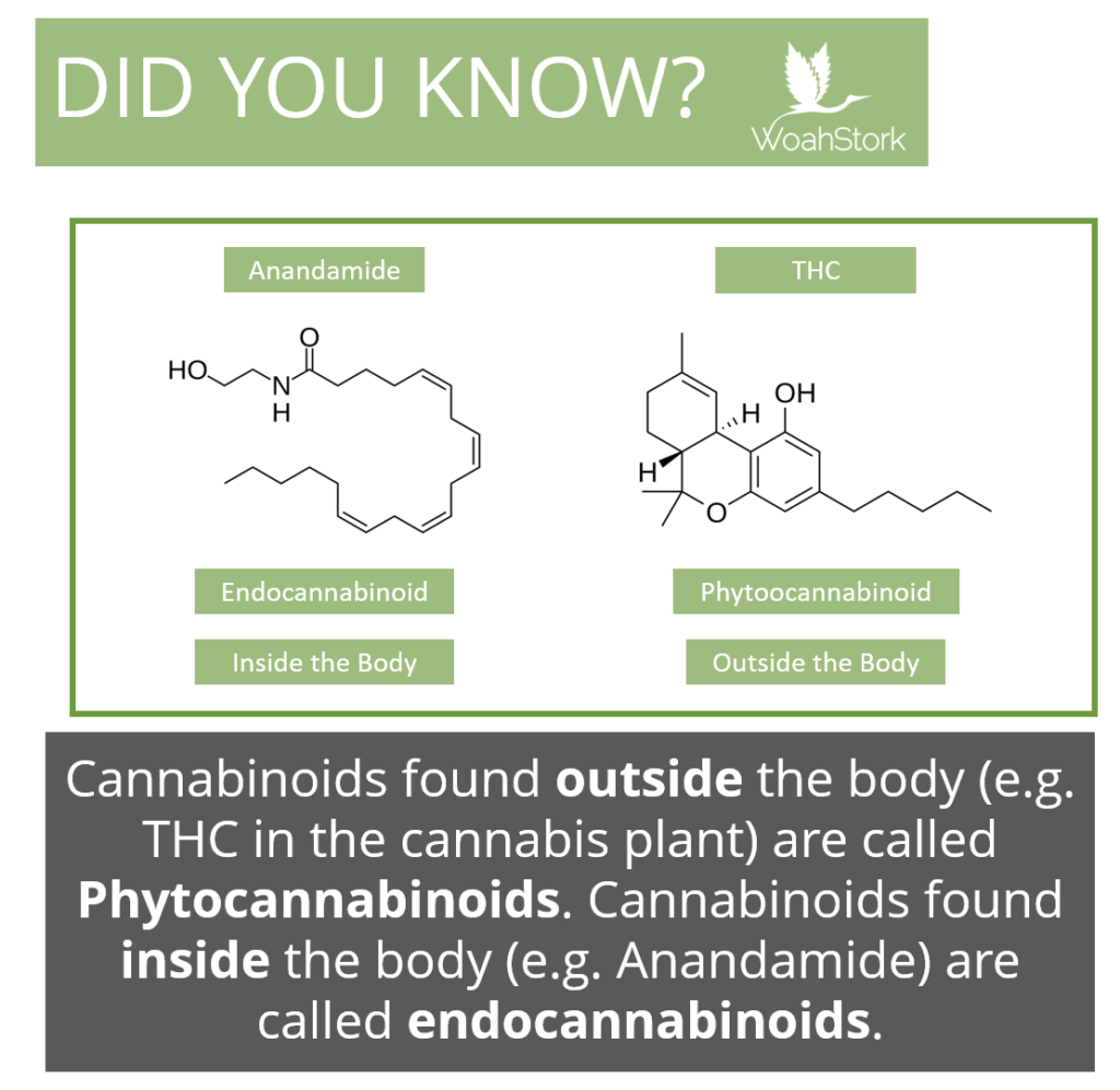stress impacts the endogenous cannabinoid system