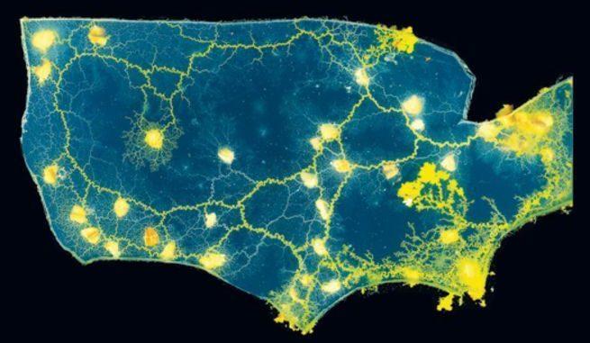 slime mold map of USA