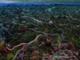 starfish swarm