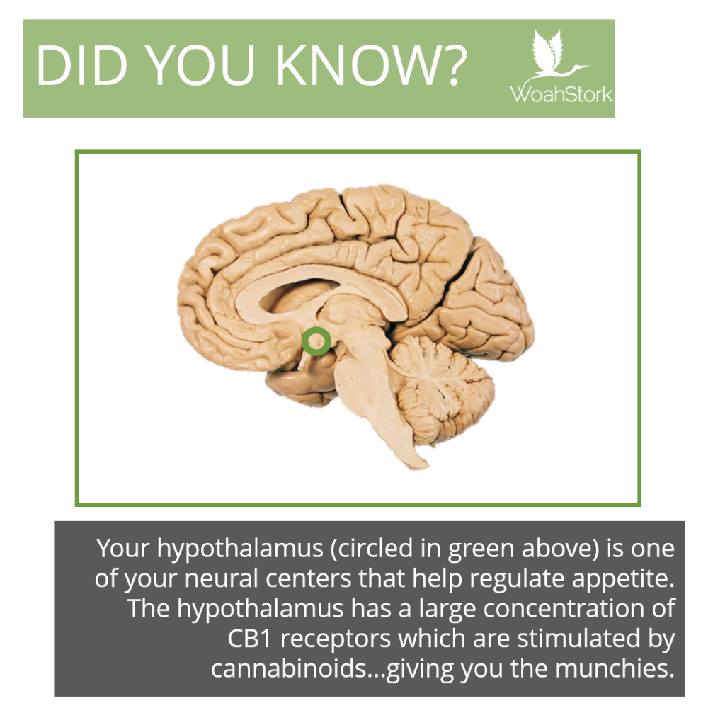 hypothalamus has endocannabinoid receptors for stress