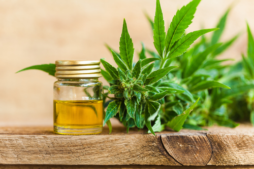 CBD tinctures seem safe to consume every day