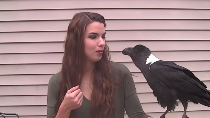 raven talking to a human and sounding like a human
