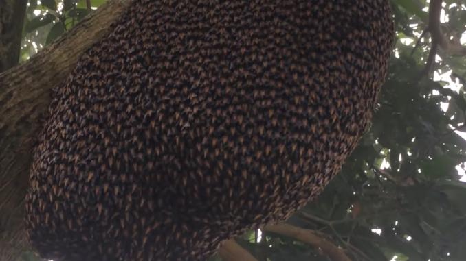 honey bee defense wave