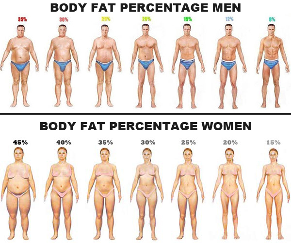 Men and women differ in their average body fat, which could affect their respective absorption of cannabis given its fat-solubility.