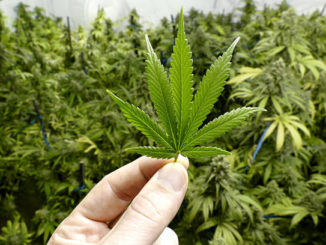 cannabis without notice