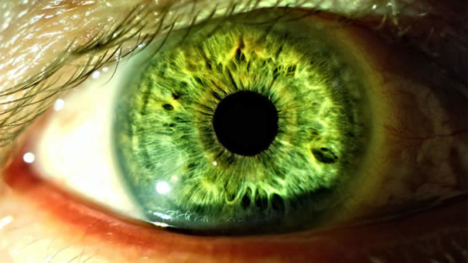 cannabis for eye health